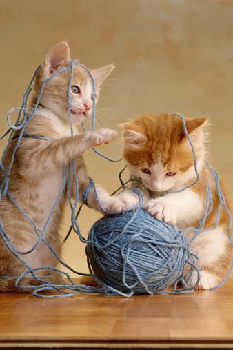 Mischief「2 KITTYS WITH YARN」:スマホ壁紙(3)