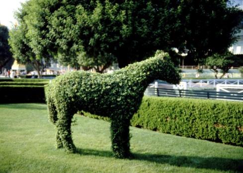 Horse「24112575」:スマホ壁紙(8)