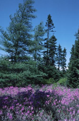 Boreal Forest「23935544」:スマホ壁紙(1)