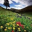 コロラド州有林壁紙の画像(壁紙.com)