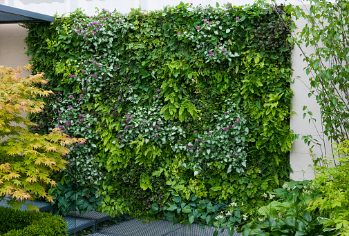 Sponsor「LIVING WALL WITH FERNS AND LAMIUM」:スマホ壁紙(8)