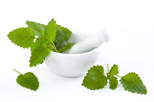 Mint Leaf - Culinary「LEMON BALM」:スマホ壁紙(14)