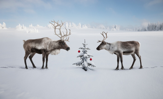 reindeer「TWO REINDEER LOOKING AT CHRISTMAS TREE」:スマホ壁紙(3)