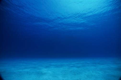 水中写真「24026960」:スマホ壁紙(19)