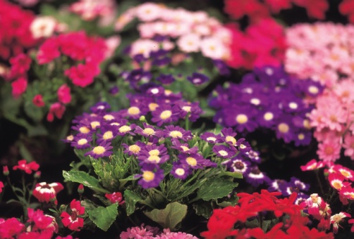 Flower Shop「24096474」:スマホ壁紙(16)