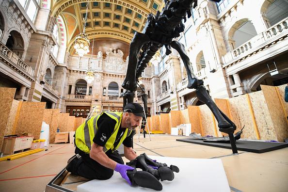 ヒューマンインタレスト「Dippy The Diplodocus Arrives At The Glasgow Art Galleries」:写真・画像(1)[壁紙.com]