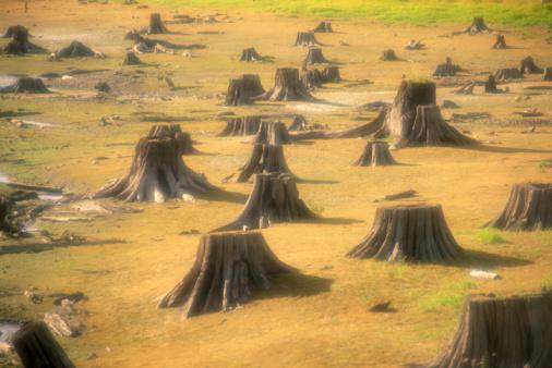 Deforestation「DEFORESTED AREA IN WASHINGTON STATE」:スマホ壁紙(12)