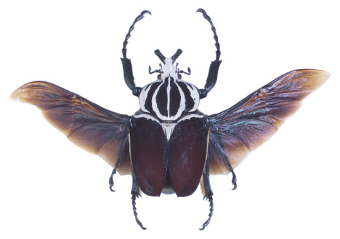 虫・昆虫「23640369」:スマホ壁紙(8)