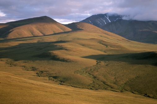Arctic National Wildlife Refuge「TUNDRA AND FOOTHILLS IN THE ARTIC NATIONAL REFUGE IN ALSKA」:スマホ壁紙(11)