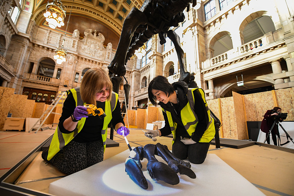ヒューマンインタレスト「Dippy The Diplodocus Arrives At The Glasgow Art Galleries」:写真・画像(4)[壁紙.com]