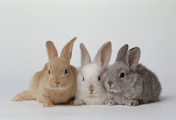 BABY BUNNIES, BROWN, WHITE, GRAY:スマホ壁紙(壁紙.com)