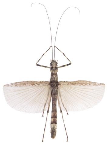 虫・昆虫「23630234」:スマホ壁紙(6)