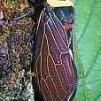 Mt Kinabalu壁紙の画像(壁紙.com)