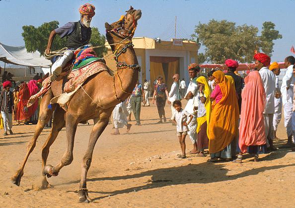 Rajasthan「Annual Camel Fair in Pushkar, India」:写真・画像(1)[壁紙.com]