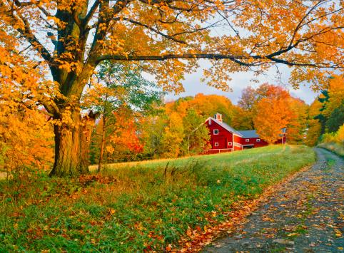 Sugar maple「A stunning park in Vermont in autumn」:スマホ壁紙(6)