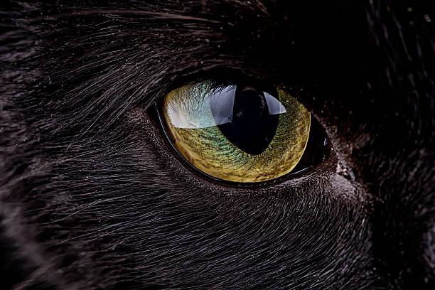 Eye of black cat, Felis silvestris catus:スマホ壁紙(壁紙.com)