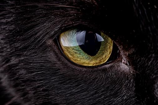 black cat「Eye of black cat, Felis silvestris catus」:スマホ壁紙(9)