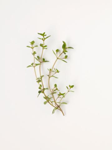 Thyme「Fresh thyme on white background」:スマホ壁紙(19)