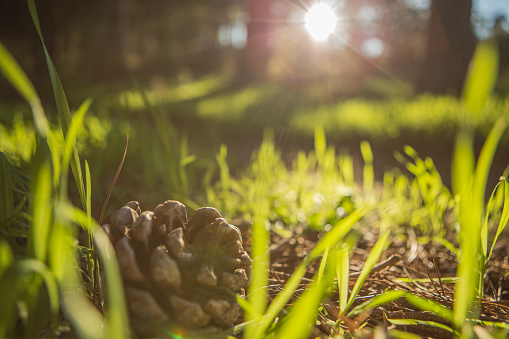 Fallen Tree「Surface level shot with lens flare of pine cone on grass with twigs, Somerset West, Western Cape Province, South Africa」:スマホ壁紙(6)