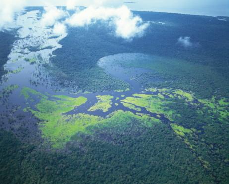 Amazon Rainforest「Aerial shot of Amazon forest」:スマホ壁紙(0)