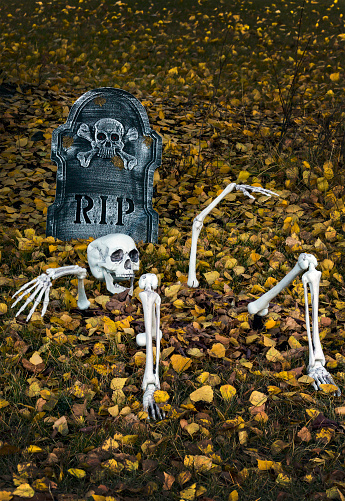 ハロウィン「Halloween decoration of a skeleton half buried on a leaf covered lawn with RIP tombstone」:スマホ壁紙(18)