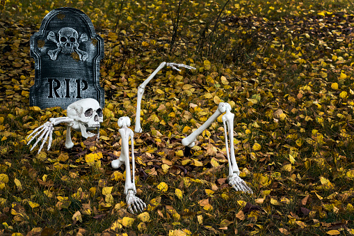 ハロウィン「Halloween decoration of a skeleton half buried on a leaf covered lawn with RIP tombstone」:スマホ壁紙(17)