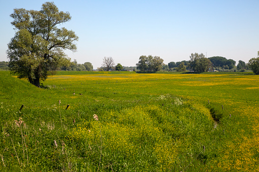 North Brabant「Flowery grassland in Biesbosch National Park」:スマホ壁紙(6)