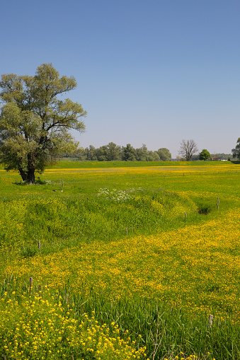 North Brabant「Flowery grassland in Biesbosch National Park」:スマホ壁紙(7)