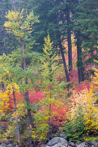 ウェナチー国有林「Forest in autumn, Tumwater Canyon, Wenatchee National Forest, Washington State, USA」:スマホ壁紙(11)