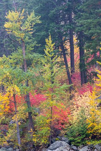 ウェナチー国有林「Forest in autumn, Tumwater Canyon, Wenatchee National Forest, Washington State, USA」:スマホ壁紙(10)