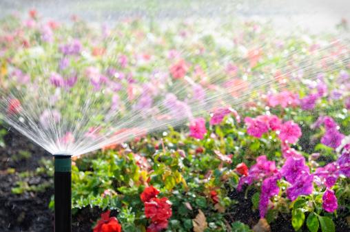 Automatic「Automatic Sprinkler Watering Flowers」:スマホ壁紙(4)