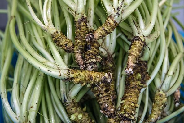 ビジネスと経済「Wasabi Farming In Japan」:写真・画像(11)[壁紙.com]