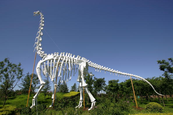 Amusement Park「A Dinosaurs Theme Park Opened In Beijing」:写真・画像(12)[壁紙.com]