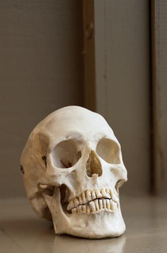 ドクロ「Model of a Human Skull」:スマホ壁紙(18)