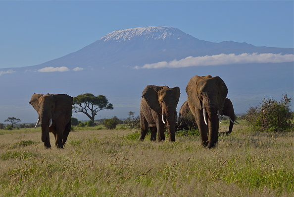 Mountain「Amboseli National Park」:写真・画像(2)[壁紙.com]