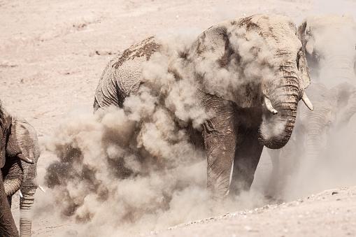 Elephant「象のダスト」:スマホ壁紙(8)
