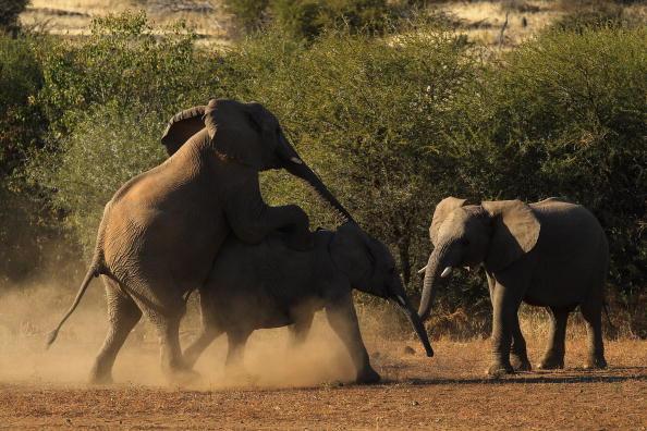 Botswana「An African Safari」:写真・画像(10)[壁紙.com]