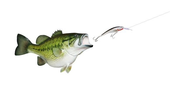 Animals Hunting「Largemouth Bass Chasing Lure」:スマホ壁紙(4)