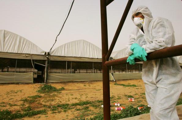 検疫「Bird flu Outbreak Spreads in Israel」:写真・画像(7)[壁紙.com]