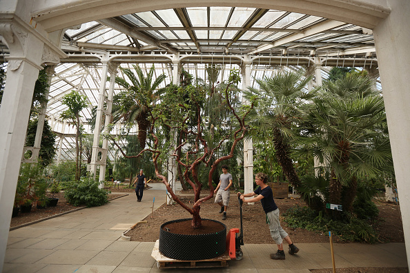 Kew Gardens「World's Largest Victorian Glass House Prepares For Restoration」:写真・画像(7)[壁紙.com]