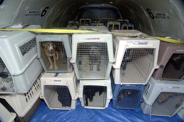 犬「Animal Victims Of Katrina Are Evacuated From Mississippi」:写真・画像(18)[壁紙.com]
