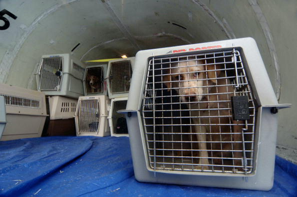 Cargo Container「Animal Victims Of Katrina Are Evacuated From Mississippi」:写真・画像(19)[壁紙.com]