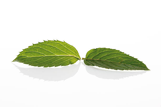 Mint leaves (Mentha x piperita):スマホ壁紙(壁紙.com)