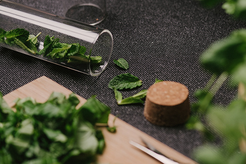 Disco Lights「Mint leaves fresh picked herbs saved and dried」:スマホ壁紙(10)