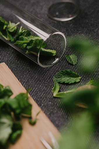 Disco Lights「Mint leaves fresh picked herbs saved and dried」:スマホ壁紙(1)