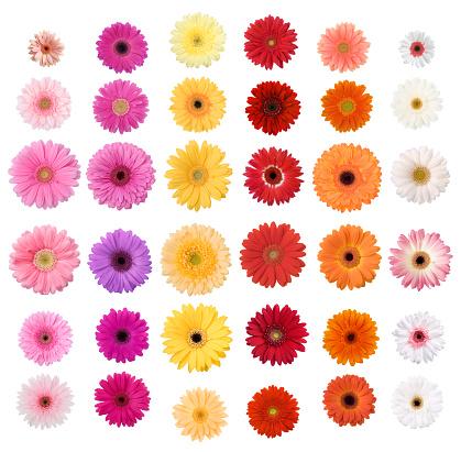 Flower Part「Daisies」:スマホ壁紙(5)