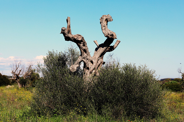 Insect「Italy's Olive Oil Production Hits 25-Year Low」:写真・画像(13)[壁紙.com]