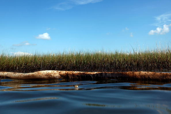 Grass「Louisiana Battles Continued Spread Of Oil In Its Waters And Coastline」:写真・画像(0)[壁紙.com]