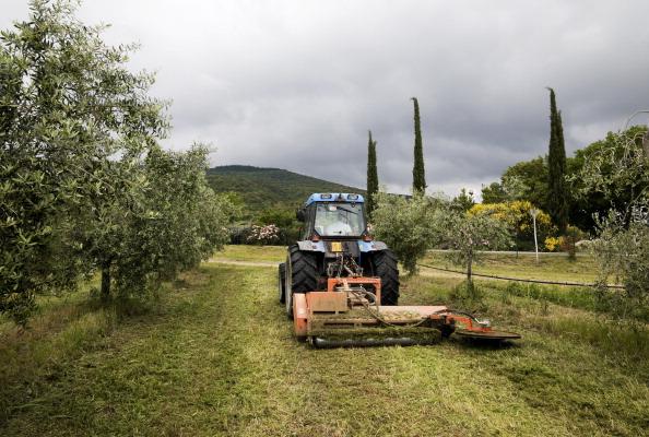 Grove「Tuscany, Italy」:写真・画像(16)[壁紙.com]