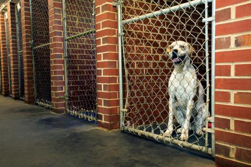 Pets「Dog in kennel」:スマホ壁紙(5)